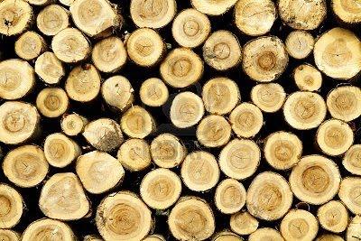 Madera de pino arkiplus - Maderas del pino ...