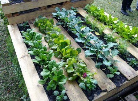 ideas jardines