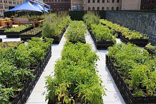Ideas para un jard n ecol gico arkiplus for Historia de los jardines verticales