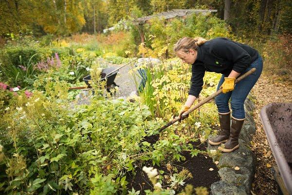 jardineria y plantas